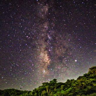 星が降る森