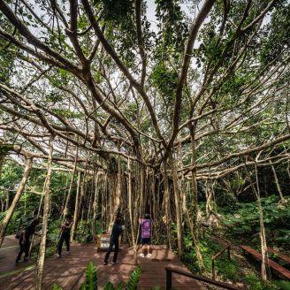 精霊の宿る木