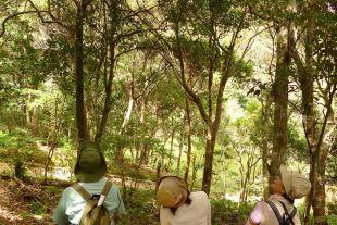 森林セラピーのサムネイル