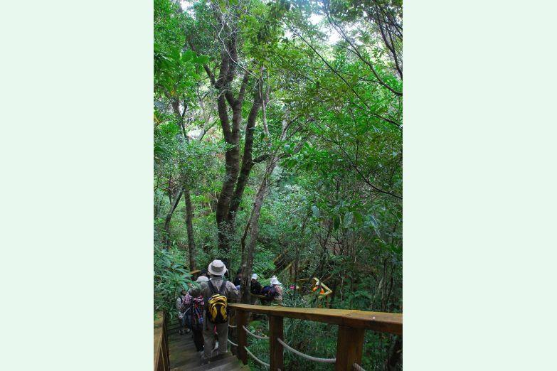 やんばる学びの森のサムネイル
